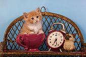 Orange and white kitten sitting in bowl by alarm clock in studio