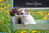 Tabby and white kittens sitting in shelf by yellow flowers in garden