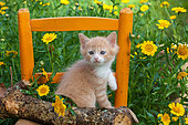 Orange and white kitten sitting on log and chair among yellow flowers in garden