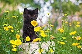 Black kitten sitting on log by yellow flowers in garden
