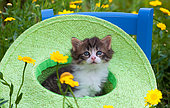 Tabby and white kitten sitting in green hat by yellow flowers in garden