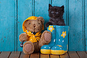 Black kitten coming out blue rainboot with teddy bear blue door background in studio
