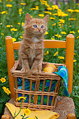 Orange and white kitten sitting in basket on chair by yellow flowers in garden