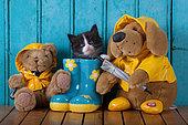 Tuxedo kitten coming out blue rainboot with teddy bears blue door background in studio
