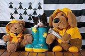 Tuxedo kitten coming out blue rainboot with teddy bears by breton flag blue door background in studio