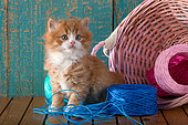Orange and white kitten sitting by fallen pink basket with balls of strings