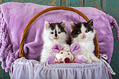Tuxedo kittens sitting in basket with pink fabric mouse in studio