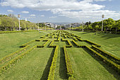 Common box (Buxus sempervirens), Eduardo VII park, Lisbon, Portugal