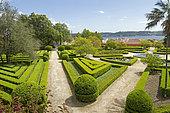 Common box (Buxus sempervirens), Ajuda botanic garden, Lisbon, Portugal