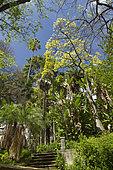 Phoenix, Strelitzia, Washingtonia, University botanic garden, Lisbon, Portugal
