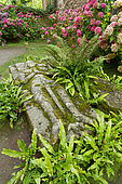 Hart's-tongue fern (Asplenium scolopendrium) and Hydrangeas (Hydrangea) around a grave