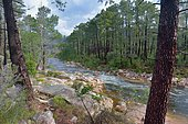 Oso river in the heart of the Ospedale forest, Corsica, France