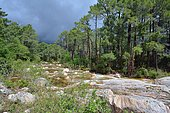 Storm on the Oso river and the forest of Ospedale, Corsica, France
