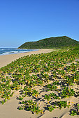 iSimangaliso Wetlands Park. This park, 3 300km² wide, is protecting various lakes and forests along the coast line famous for its beaches. Santa Lucia. Kwazulu Natal. South Africa.