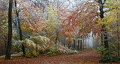 Forêt mixte de montagne (chênes, pins, hêtres, alisiers) en automne dans la première neige, Parc naturel régional des Vosges du Nord, France