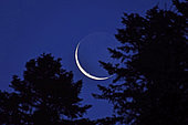 Moonrise through the trees, crescent and ashy moon, France