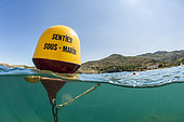 Mid-air view of a buoy on the underwater trail of the Cerbère-Banyuls Marine Nature Reserve, Peyrefite beach, Pyrénées-Orientales, Occitanie, France