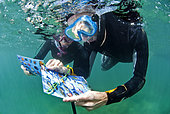 Divers / snorkelers discovering the Cap d'Agde underwater trail using plastic guides, Agde, France, Mediterranean Sea