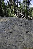 Glacier-polished columnar basalt viewed from above, Devils Postpile National Monument, California.