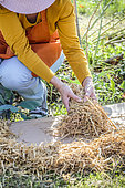 Woman practicing ecological weeding with cardboard and straw. 3: cover the cardboard with a thick organic layer like straw.