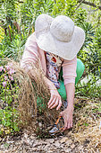 Woman cuting a gaura in the spring.