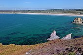 Goulien beach located along the Gr 34 bordered by heather and ferns, Crozon Peninsula, Brittany, France