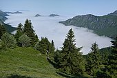 Sea of clouds above the Bois du Gey, one of the richest biotope of wild cats in Europe, Aspe Valley, Pyrenees, France