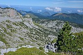 From Les Tourelles, view of the GR10 path passing through Pas de l'Osque, Karst relief dotted with Hooked Pines, Pyrenees, France
