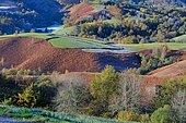 Bocage recouvert de givre le matin en vallée de Barétous, Béarn, Pyrénées Atlantiques, France