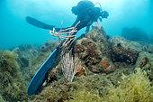 Palm of a scuba diver destroying a white gorgonian (Eunicella singularis), Marine Protected Area of the Agathoise Coast, Hérault, Occitanie, France