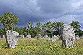 Menec Alignments, Menec Megalithic Site, Carnac, Morbihan, Brittany, France