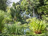 Sagittaria, Papyrus, Nympheae, Bassin central du Jardin de Aclimatacion de la Orotava, Ravenala madagascariensis, Puerto de La Cruz, Tenerife, Iles Canaries, Espagne