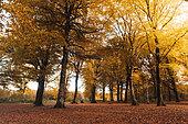 Forêt de Guînes in autumn, Pas de Calais, France