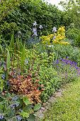 Mixed bordure en fleurs dans un jardin au printemps, Pas de Calais, France