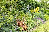 Mixed flower border in a garden in spring, Pas de Calais, France