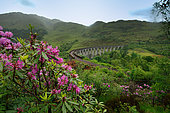 Railway Glenfinnan Viaduct, Scotland