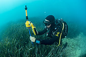Scuba diver marine biologist mapping a Posidonia herbarium using acoustic telemetry. Site of Aresquiers, off Frontignan, Hérault, Occitanie, France.