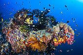 Coral reef, Misool, Raja Ampat, Indonesia