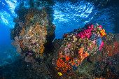 Multicolored reef, Misool, Raja Ampat, Indonesia