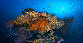 The underwater panoramic view, Four Kings, Misool, Raja Ampat, Indonésie
