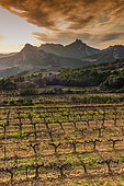 Sunset over the vineyards and the Dentelles de Montmirail, Vaucluse, France.