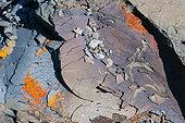 Flyschs (calcaire argileux) éclatés par le gel et le soleil, Samoëns, Haute-Savoie, Alpes, France
