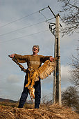 Man carrying an electrocuted Eagle Owl (Bubo bubo) holding in his talons a Barn Owl (Tyto alba), Vosges du Nord Regional Natural Park, France