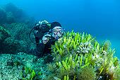 Diver observing the invasive exotic alga Caulerpe (Caulerpa taxifolia) colonizing an artificial reef. Larvotto underwater reserve, Monaco. Warming and tropicalization of the Mediterranean.