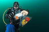 Diver-Researcher at the Nice Institute of Chemistry collecting sponges in an attempt to extract bioactive molecules, potentially valuable in the therapeutic field (anti-infectives, anticancer), off M'dic, Morocco. Scientific mission.