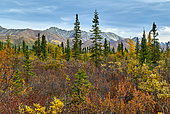 Paysage depuis la Nabesna road en automne, Glenn highway : de Tok à Anchorage, Alaska