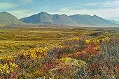 Around Maclaren summit in autumn. Denali Highway: Paxson to Cantwell, Alaska