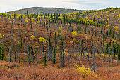 """""""White mountains"""" en automne près de U.S creek road, Steese highway, de Fox à Circle, Alaska"""