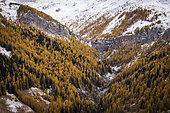 Cascade des Barres de Roya and autumn color of the larch forest of the Maïris valley, Tinée valley, Roya, Mercantour National Park, Alpes-Maritimes, France