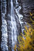 Cascade des Barres de Roya and autumn color of larch, Roya, Tinée valley, Mercantour National Park, Alpes-Maritimes, France